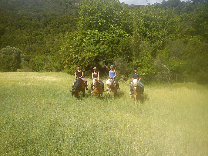 kefalonia horse riding 06