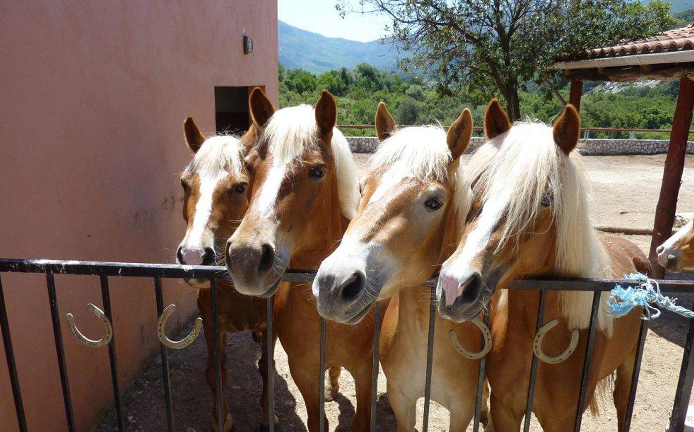 kegfalonia_horse_riding_sami_kefalonia_04